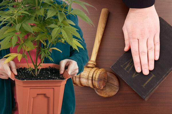 Cultivation, Drug Culitvation Charges, Drug Culitvation Charges Lawyer, Drug Culitvation Charges Austin TX, Drug Culitvation Charges in Austin