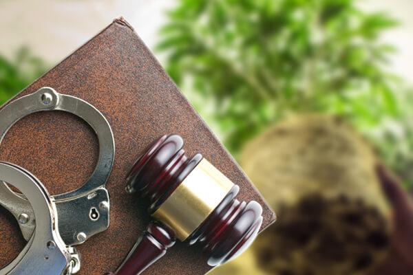 Federal Drug Cultivation Charges, Federal Drug Cultivation Charges Austin TX, Federal Drug Cultivation Charges in Austin, Drug Cultivation Charges, Drug Cultivation Charges Lawyer